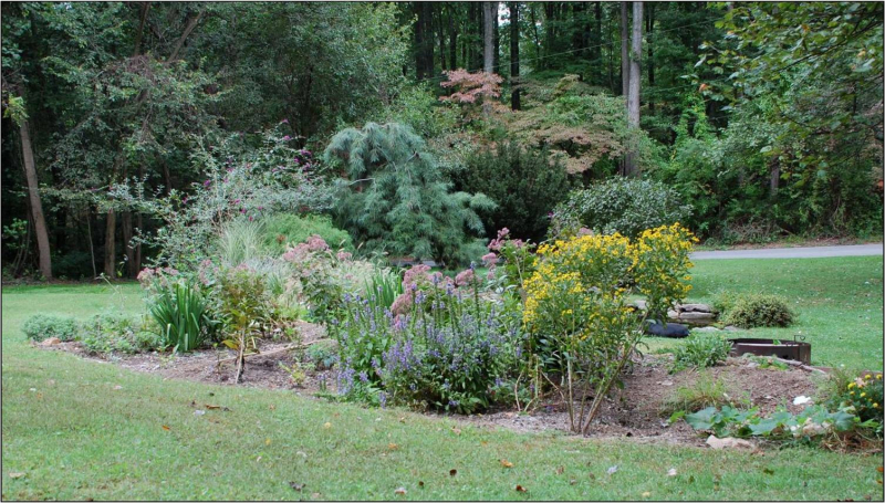 CCKs rain garden2